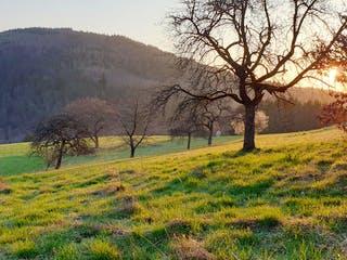 Freistehendes Grundstück im Odenwald bei Sonnenuntergang
