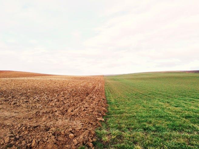 Leeres Feld und Wiese nebeneinander