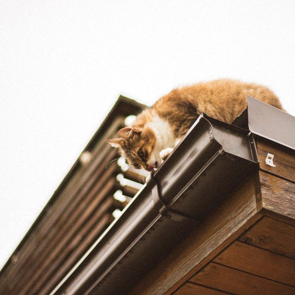 Katze trinkt aus einer Dachrinne