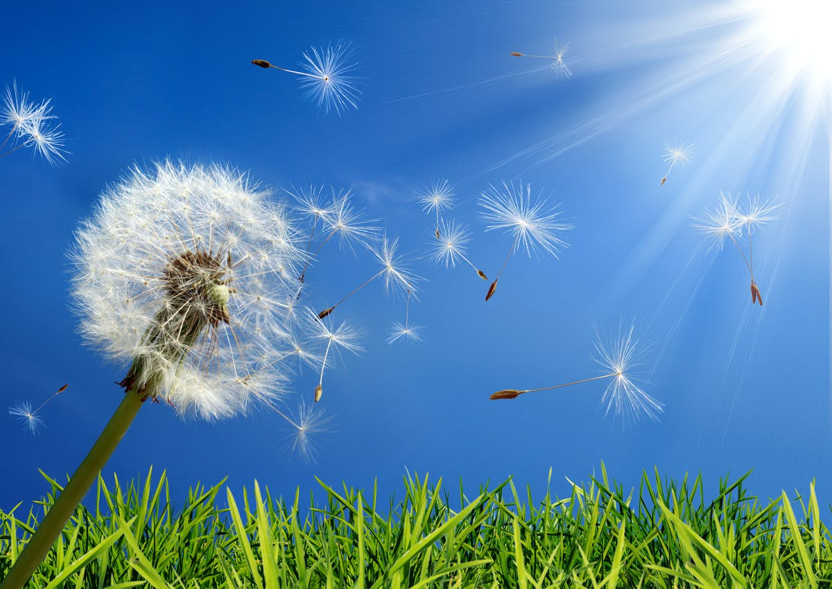 Allergikerfreundlicher Hausbau