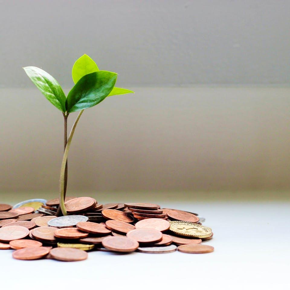 Sprössling wächst aus Geldmünzen