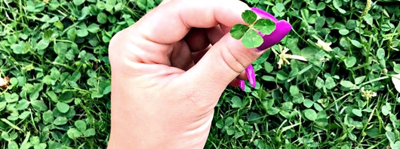 Vierblättriges Kleeblatt auf einer Wiese