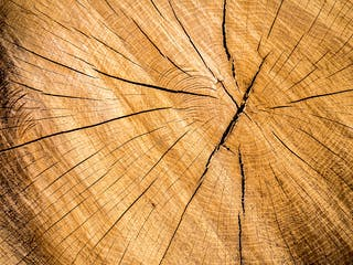 Baumstamm Querschnitt mit vielen Jahresringen