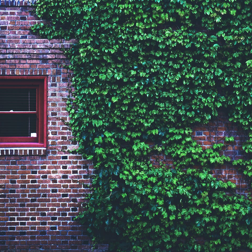 Bewachsene Steinwand eines Massivhauses Mythos