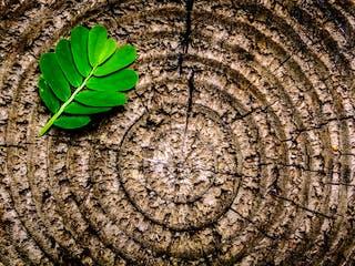 Grünes Blatt liegt auf einem Holzquerschnitt