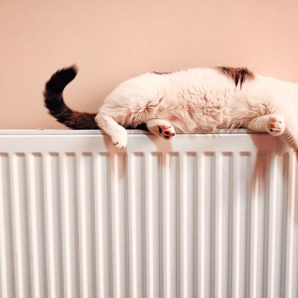 Katze liegt auf Heizung