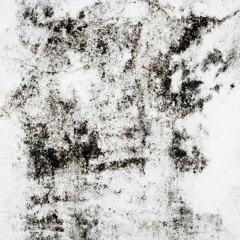 Weiße Wand im Haus mit schwarzen Schimmelspuren