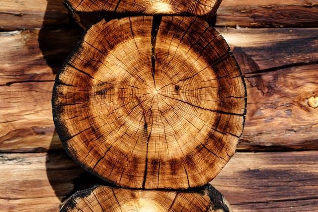 Holzstamm im Querschnitt