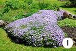 Glockenblumen für Ihren Garten