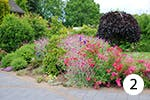 Gartennelke für Ihren Garten