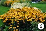 Oranger Sonnenhut für Ihren Garten