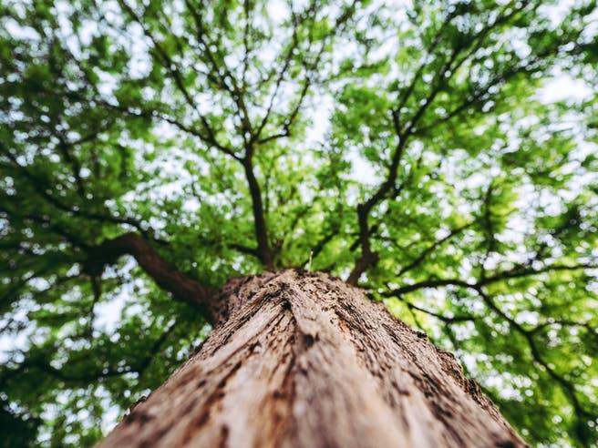 Baum auf dem Grundstück von unten