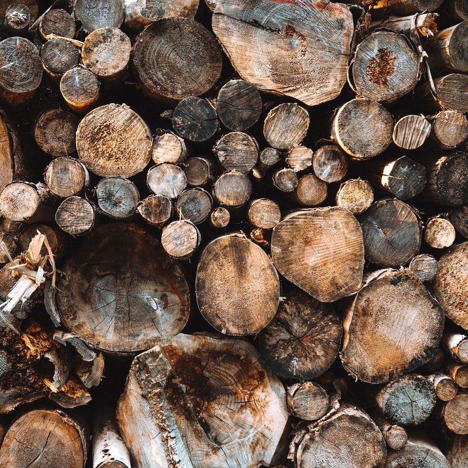 Abgeholzte Baumstämme