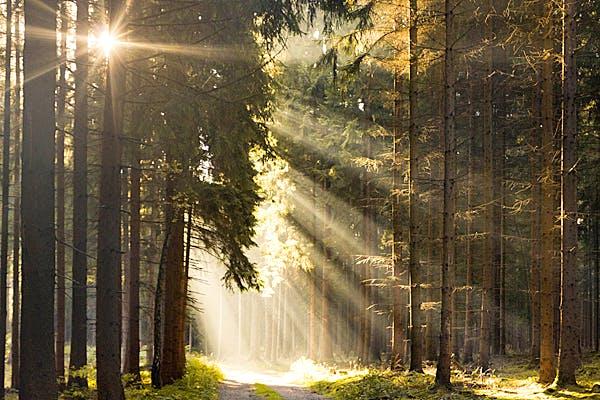 Sonne strahlt in ein Waldgebiet